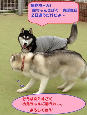 Wolf121